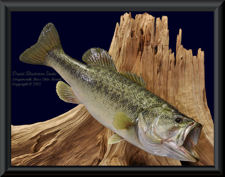 Largemouth Bass Skin Mount