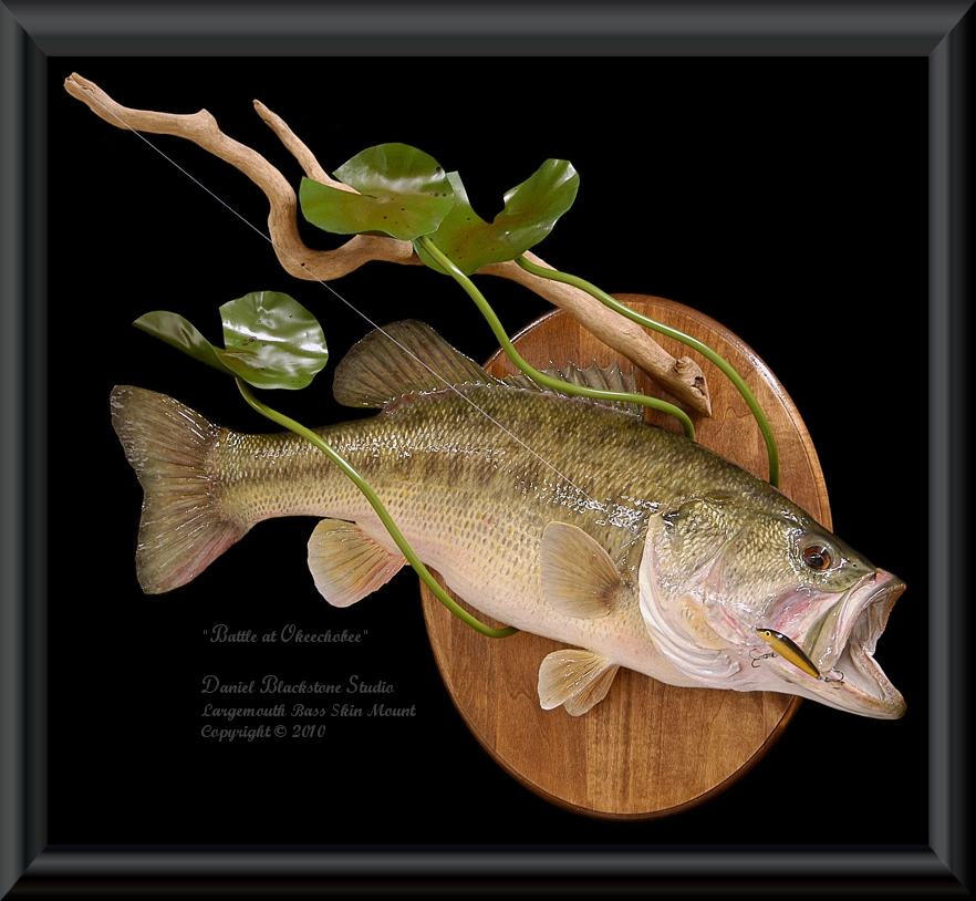 Largemouth bass fish mounts replicas for How to taxidermy a fish