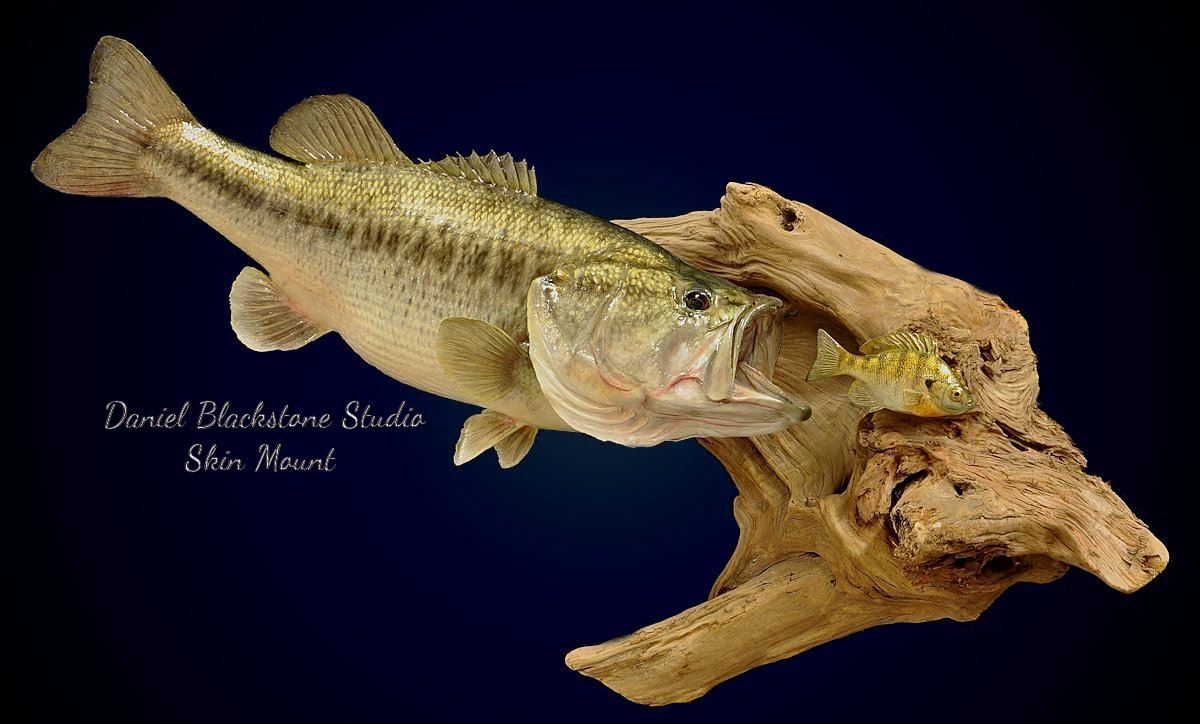 from Jagger large mouth bass photos