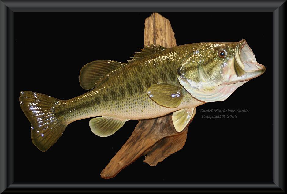 Largemouth bass replica mounts