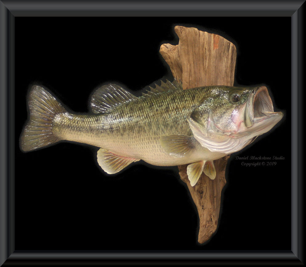 World record largemouth bass texas for Bass fish images