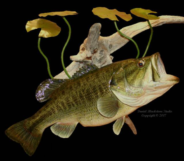 Professional fish taxidermy fish taxidermist fish for How to taxidermy a fish