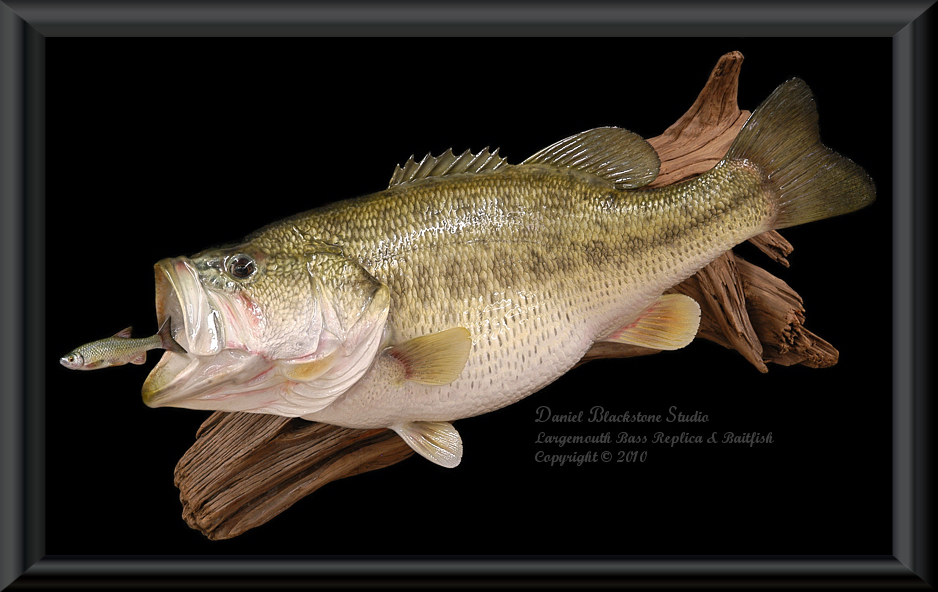 how to clean a large mouth bass fish