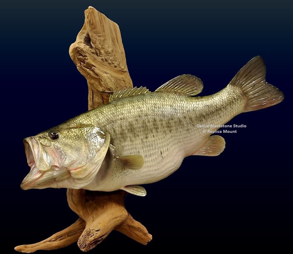Largemouth bass fiberglass fish replicas reproductions for Fish taxidermy prices