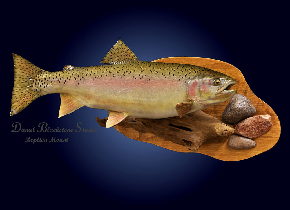 Rainbow Trout Fiberglass Fish Replicas Amp Reproductions