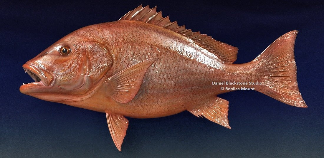 Red snapper fiberglass fish replicas reproductions for Fiberglass fish replicas