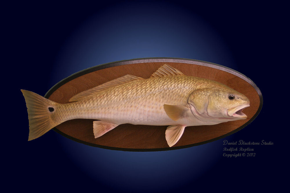 redfish fiberglass fish replicas reproductions