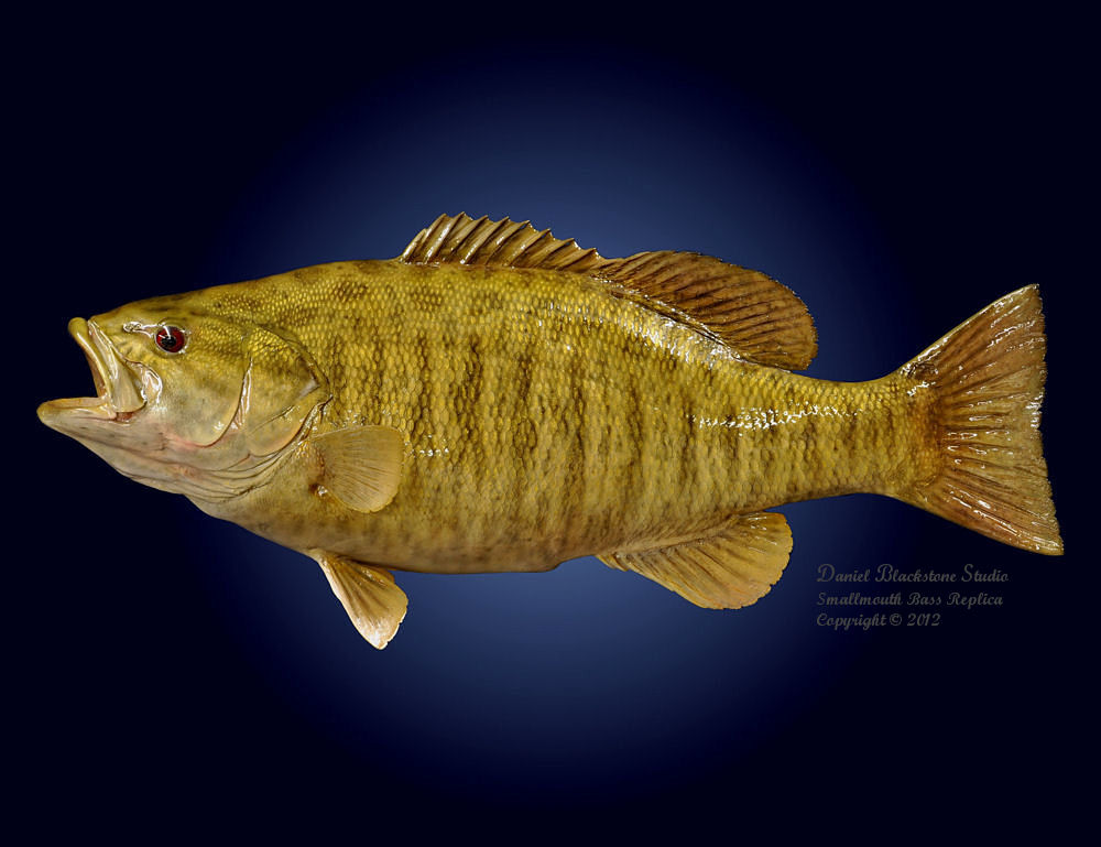 Smallmouth bass fiberglass fish replicas reproductions