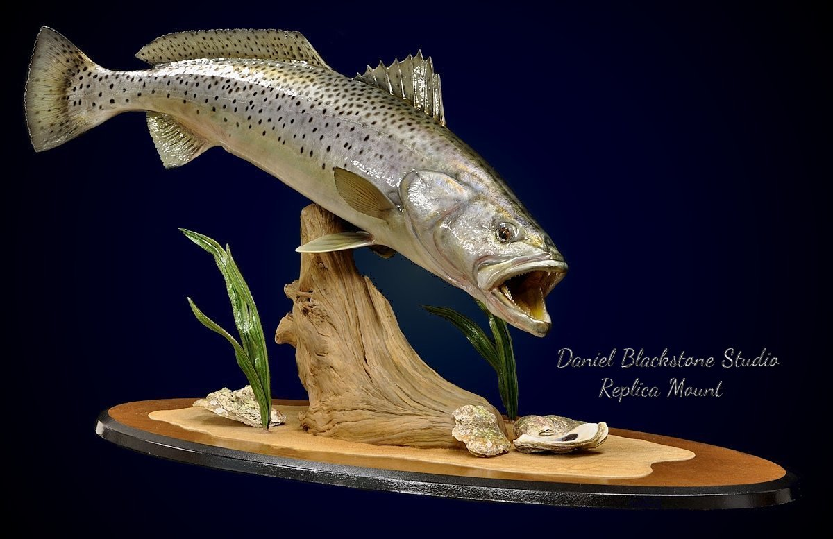 Spotted Seatrout Speckled Trout Fish Replicas