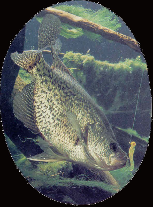Professional saltwater fish taxidermy fish taxidermist for Fish taxidermy prices