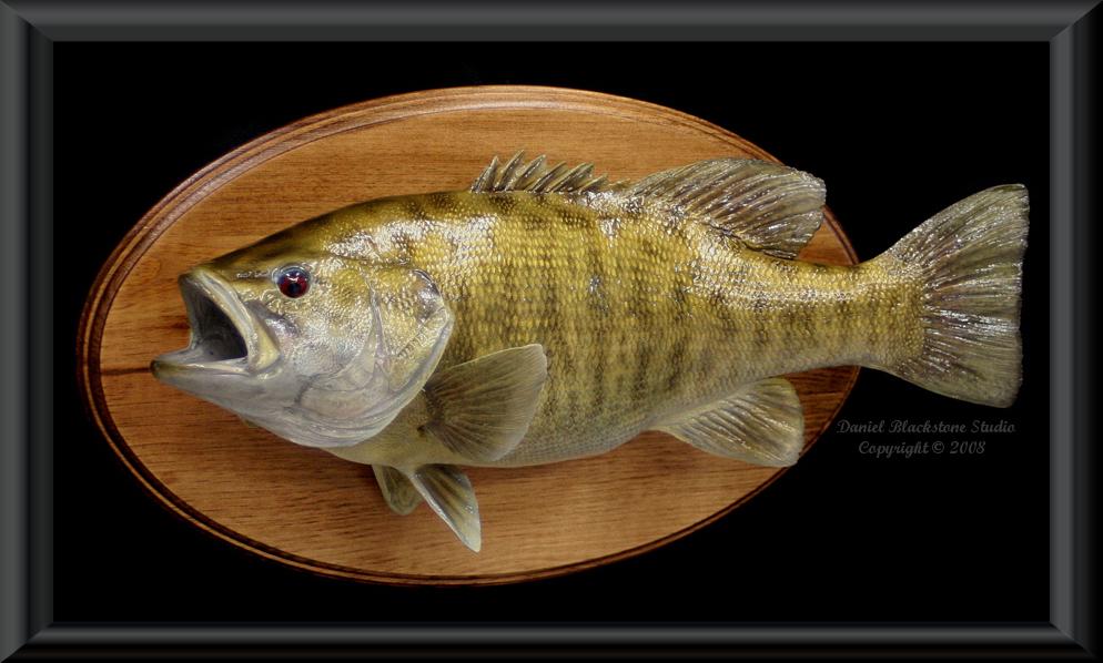 Smallmouth Bass Fiberglass Fish Replicas & Reproductions
