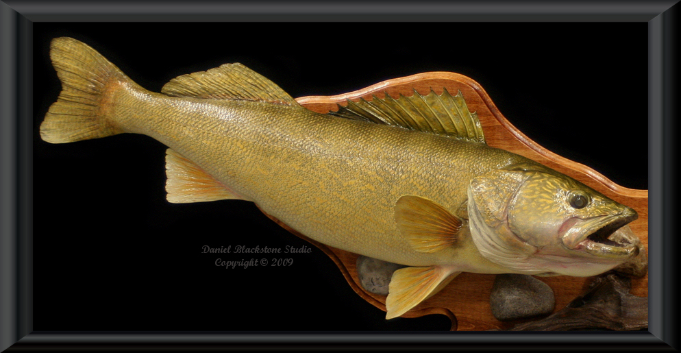 walleye fiberglass fish replicas reproductions